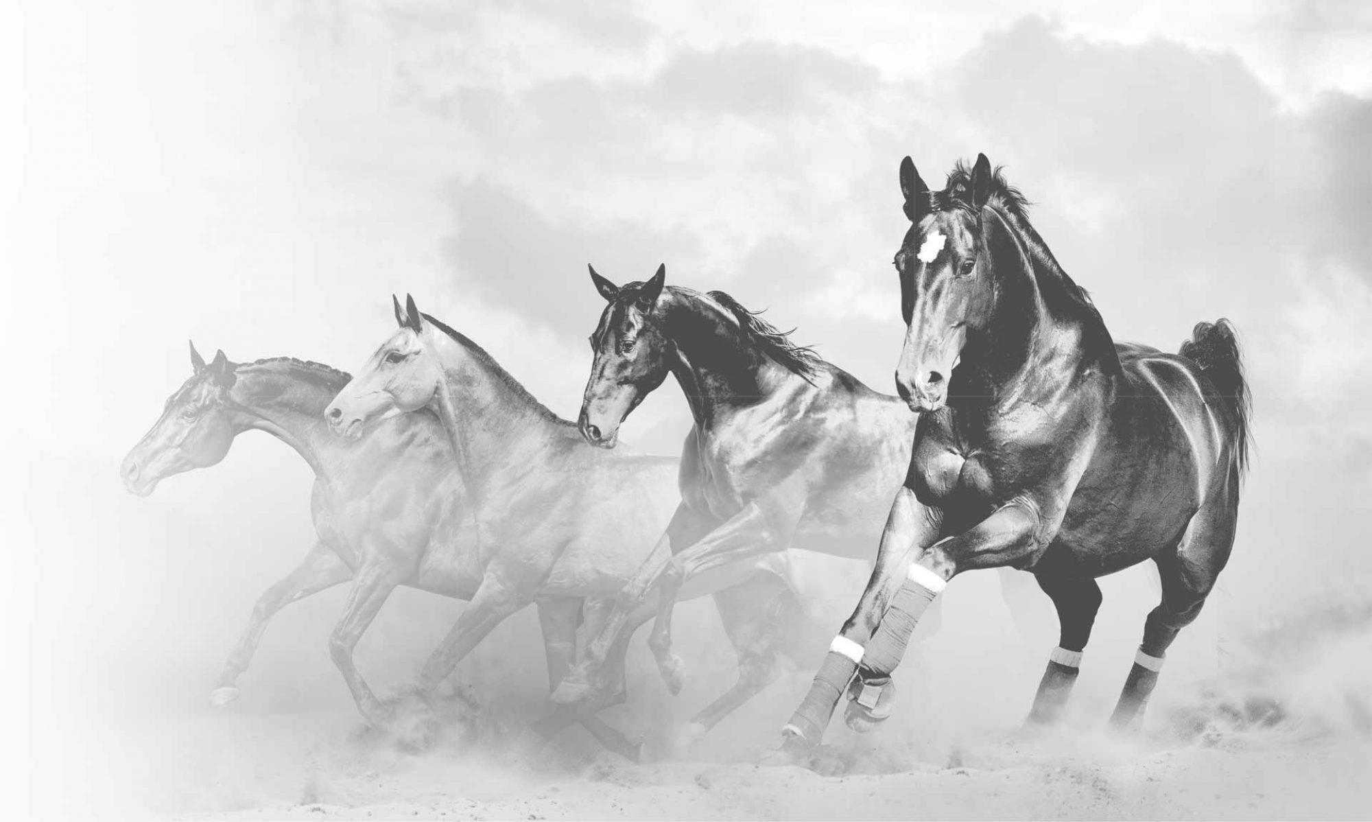 Anwälte für Pferderecht